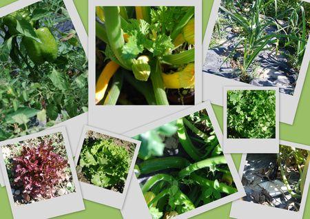 Jardin_au_retour_legumes