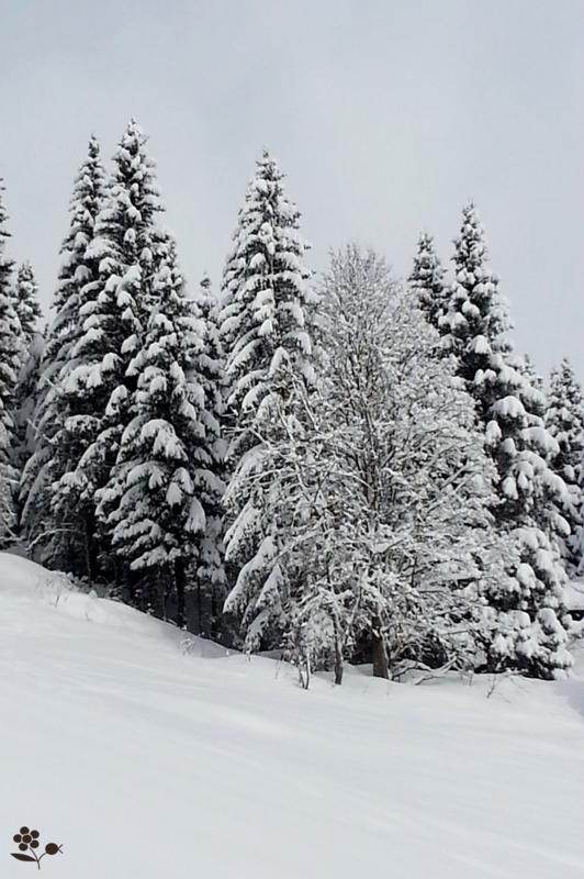 Arbres & neige_4