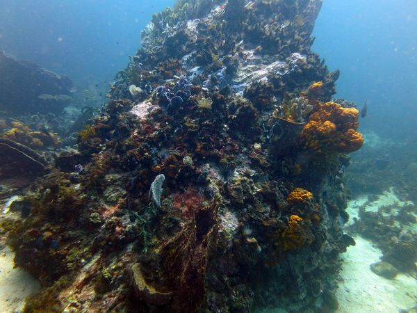 Madi-plongée (3)