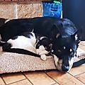 TAhoo et le chien