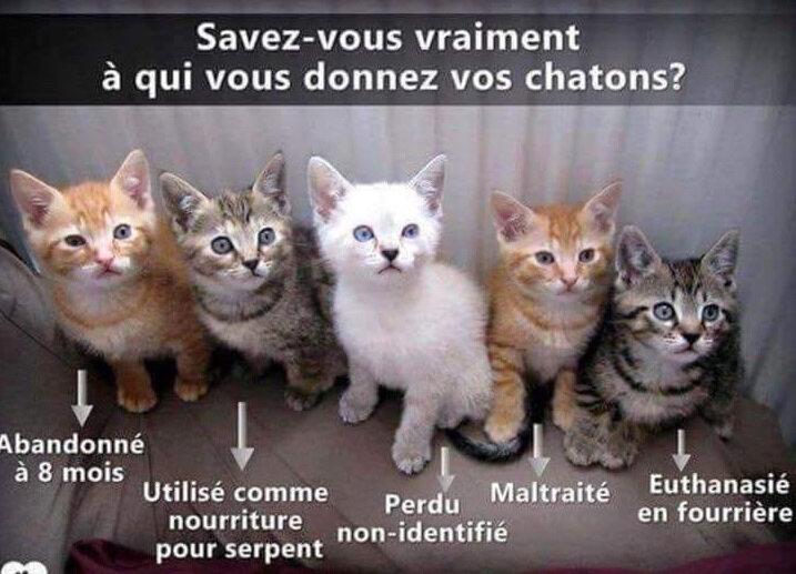 a qui vous donnez vos chatons v1
