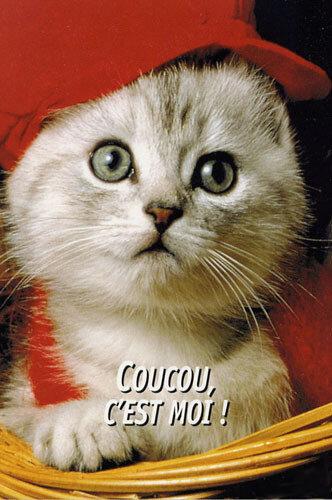 coucou c'est moi ! adorable chaton