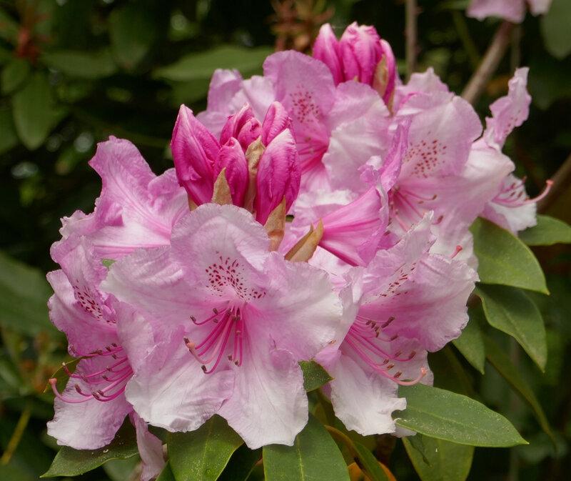 Fleur 47
