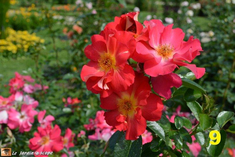 09-Concours international de roses d'Orléans 2016