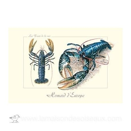 homard-carte-postale-collection-dessin-fruits-de-mer