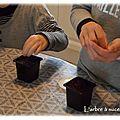 Activité enfant #6 : mercredi graines de kiwi