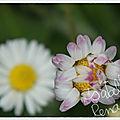 mon_jardin_10