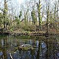 La forêt rhénane alsacienne