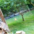 Qui a peur des araignées ?