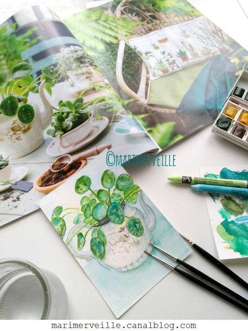 aquarelle pilea théière 2 - création marimerveille