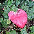 Un coeur a balata