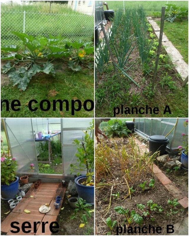juin zone compost à planche B