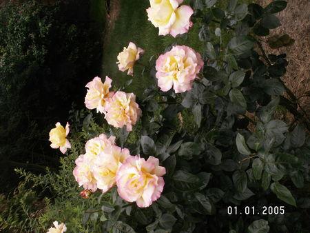 photo_souvenirs_255