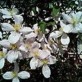 Le bouquet du vendredi chez nelly