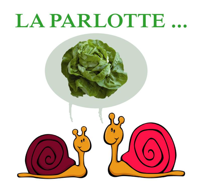 escargot-salade