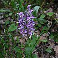 P1090492 Familles des orchidées
